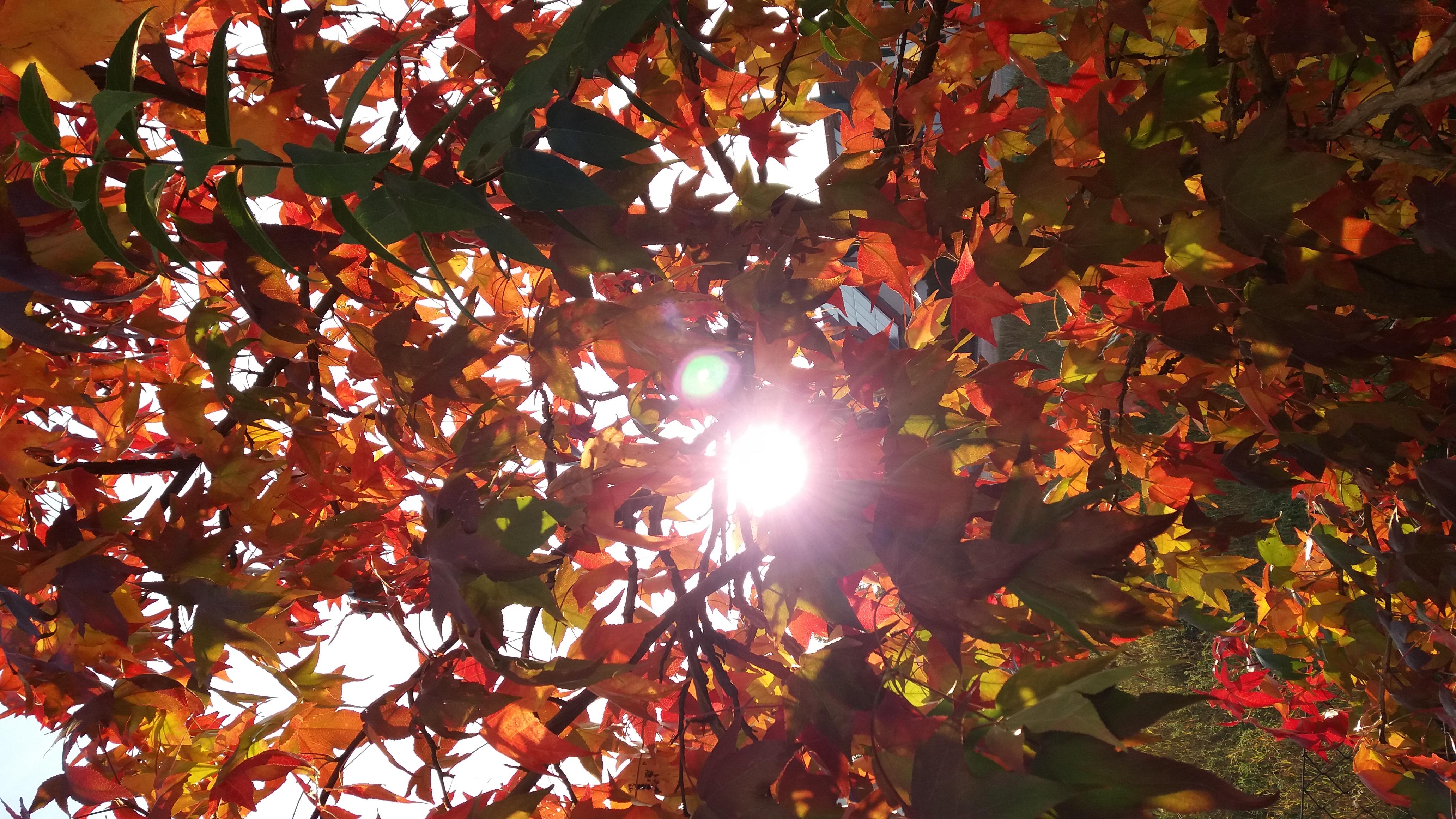Herbstblätter in der Herbstsonne