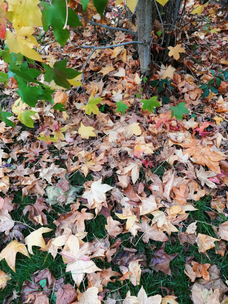 Herbstlaub-auf-dem-Beet